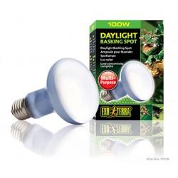 Żarówka Daylight Basking Spot R25/100W Exo Terra