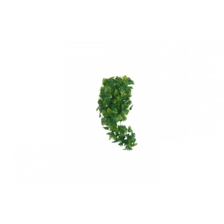 Split Philodendron