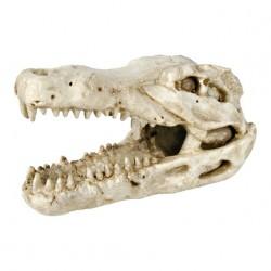 Czaszka krokodyla
